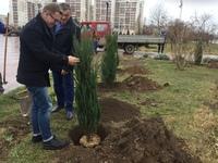 В Евпатории высадили деревья